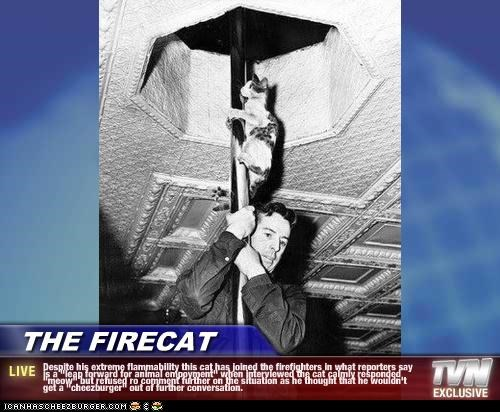 "THE FIRECAT - Despite his extreme flammability this cat has joined the firefighters in what reporters say is a ""leap forward for animal empoyment"" when interviewed the cat calmly responded ""meow"" but refused ro comment further on the situation as he thought that he wouldn't get a ""cheezburger"" out of further conversation."