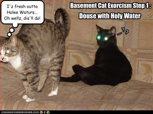 basement cat evil exorcism gross - 3236655616