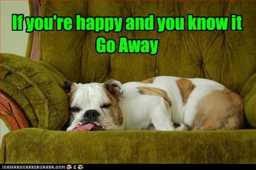 annoyed bulldog go away - 3236704768