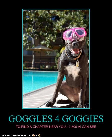 GOGGLES 4 GOGGIES TO FIND A CHAPTER NEAR YOU - 1-800-AI CAN SEE