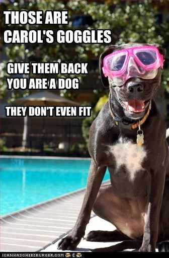THOSE ARE CAROL'S GOGGLES GIVE THEM BACK YOU ARE A DOG THEY DON'T EVEN FIT