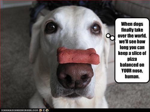 balance labrador treat trick - 3237221632