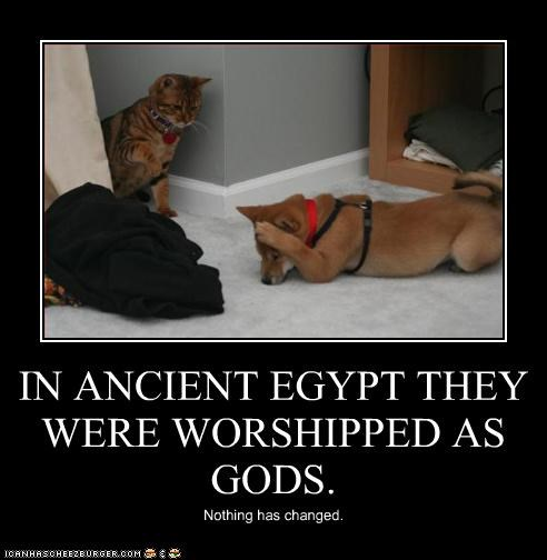 IN ANCIENT EGYPT THEY WERE WORSHIPPED AS GODS. Nothing has changed.