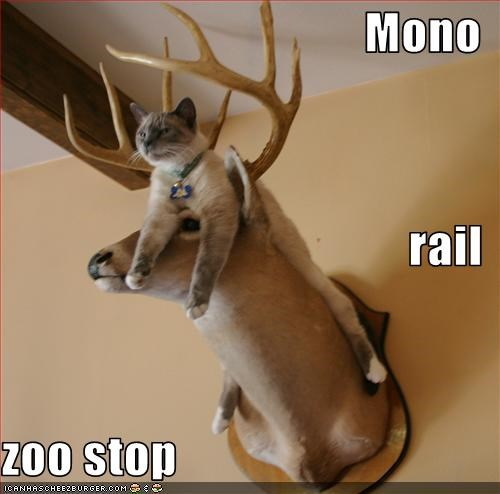 monorail cat,zoo