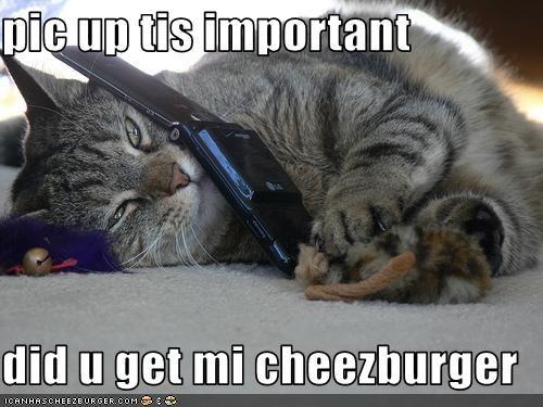 Cheezburger Image 3238103552