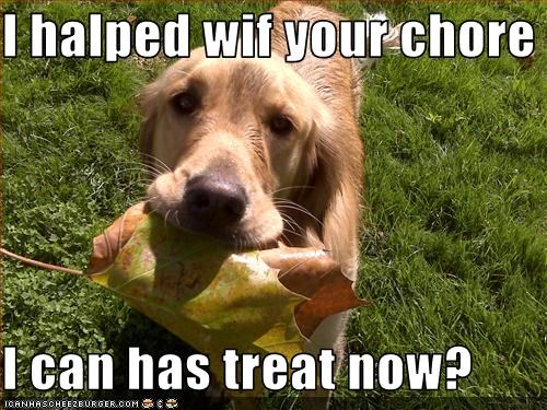 chore,golden retriever,help,leaf,treat