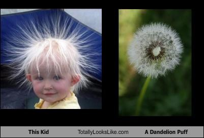 child dandelion Flower hair weed - 3238538752