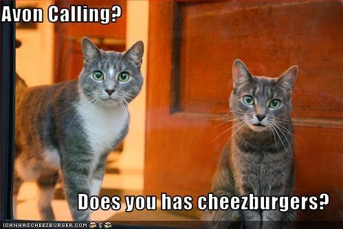 Cheezburger Image 3238563072