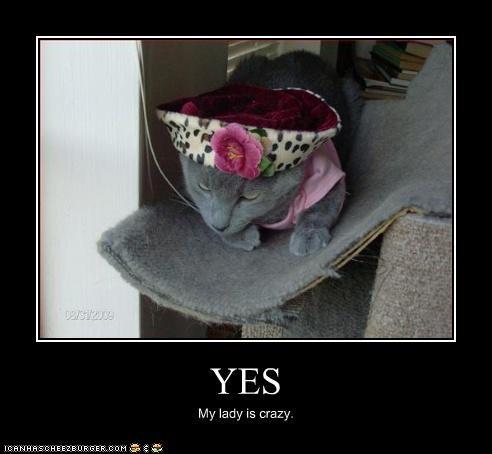costume crazy cat lady hat - 3238805760