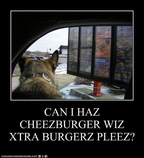 Cheezburger Image 3239010560