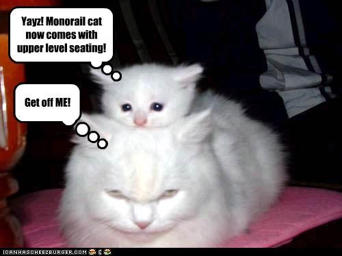 Get off ME! Yayz! Monorail cat now comes with upper level seating!