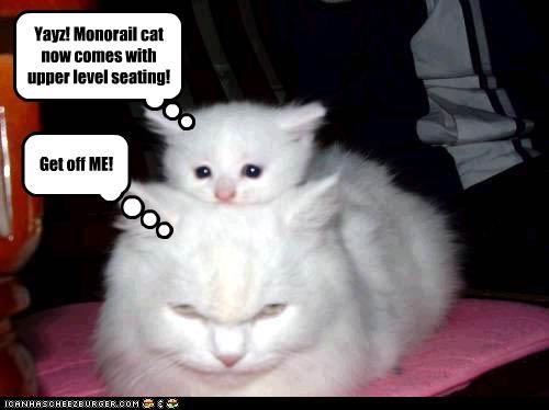 do not want kitten momcat monorail cat - 3239600640