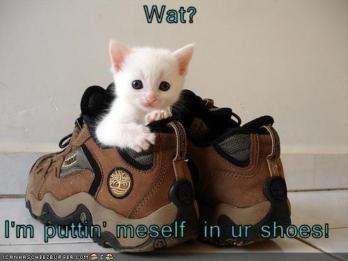 cute kitten logic shoes - 3239829760