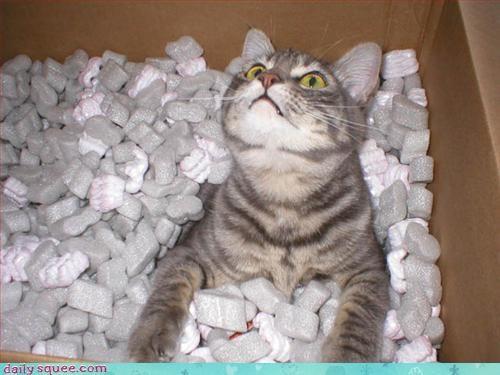 box cat kitty - 3239900672