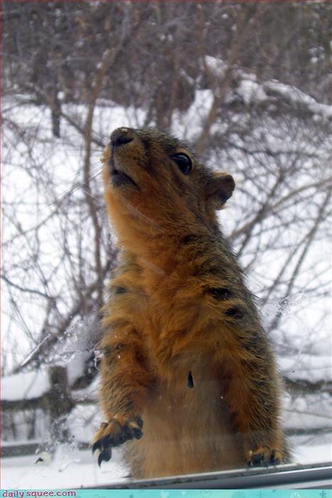 cute face squirrel - 3240106240