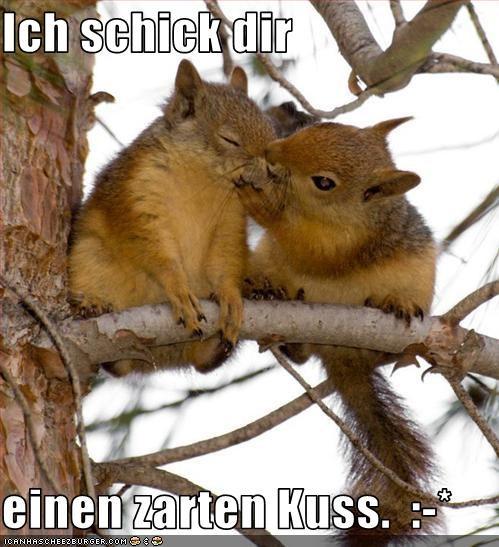 Ich Schick Dir Einen Zarten Kuss Cheezburger Funny Memes