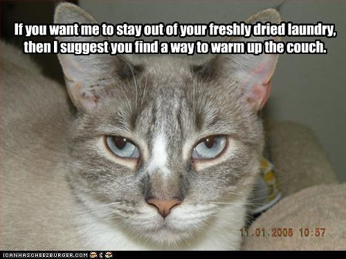 advice annoying laundry nap - 3241614592