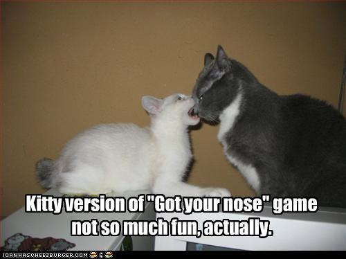 biting chomp do not want kitten - 3241721344