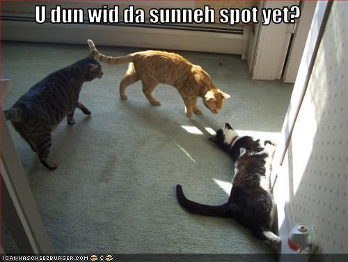 nap sharing sunbath want - 3241765632