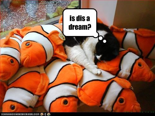 dreaming fish nap want - 3242016512