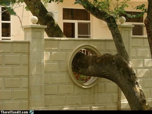Portal,Professional At Work,tree,wall,win