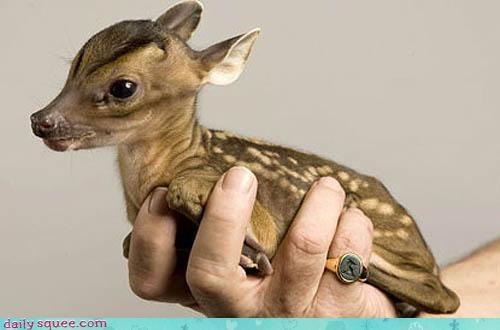 baby deer fawn - 3242406656