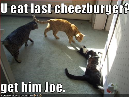 Cheezburger Image 3244071936