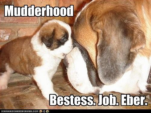 job mom motherhood puppy saint bernard