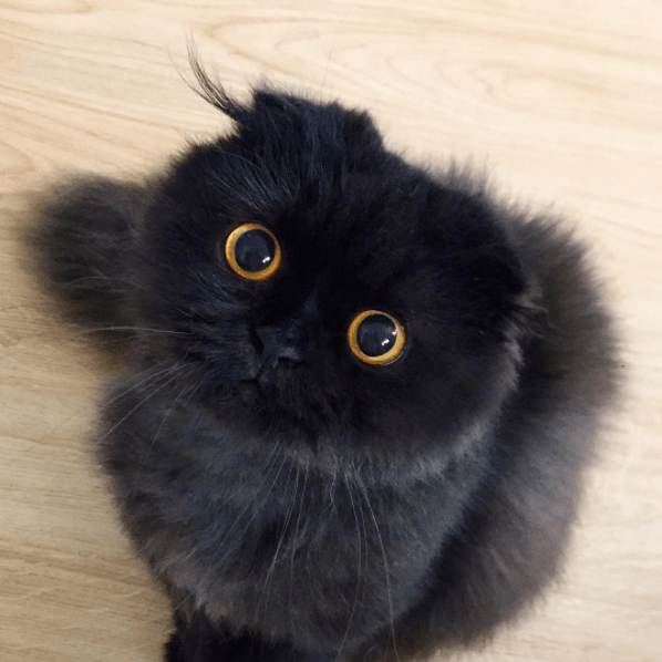 gimo the big eyed cat