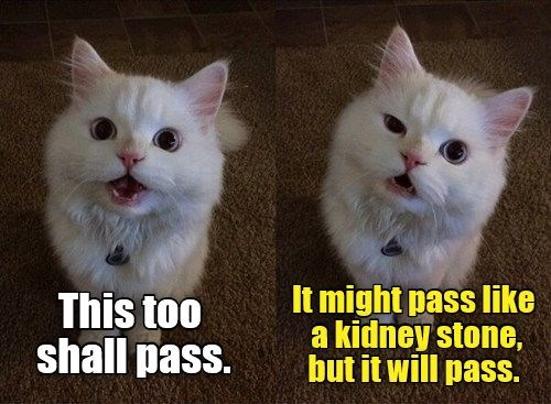 a funny saying that everything will pass, difficultly but it will pass- cover for wise words from cats
