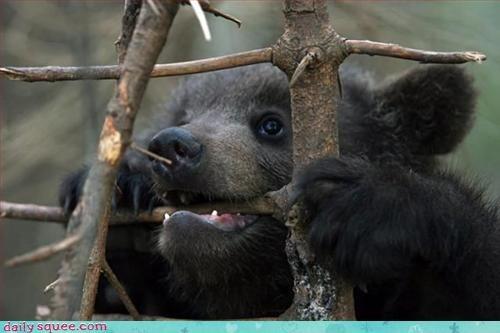 bear cute teething - 3245822720