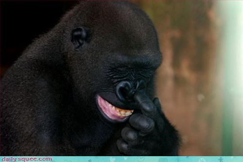 face,gorilla,smile