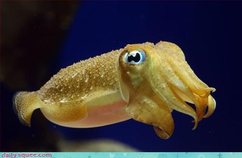 baby cuttlefish sea monster - 3245824000
