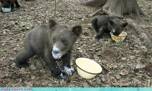 bear,noms,siblings