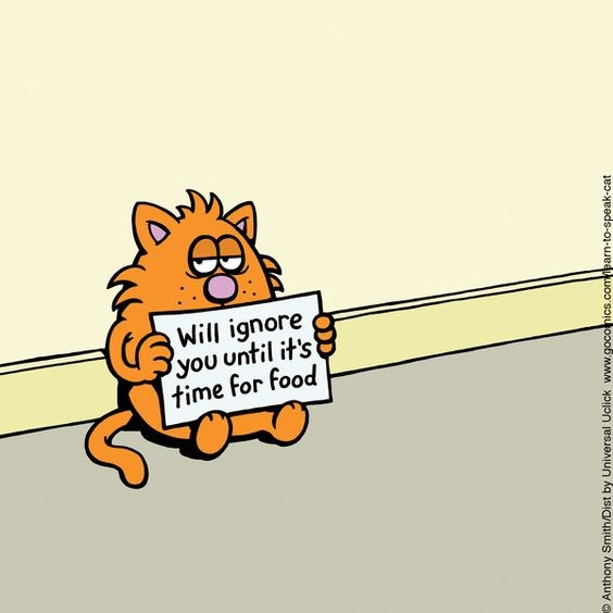 a funny comic of a cat sitting with a sign saying he will ignore his human until they feed him - cover for a list of funny comics