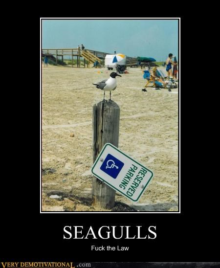SEAGULLS Fuck the Law