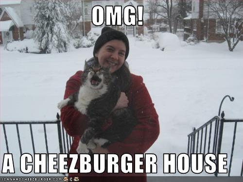 Cheezburger Image 3246173184