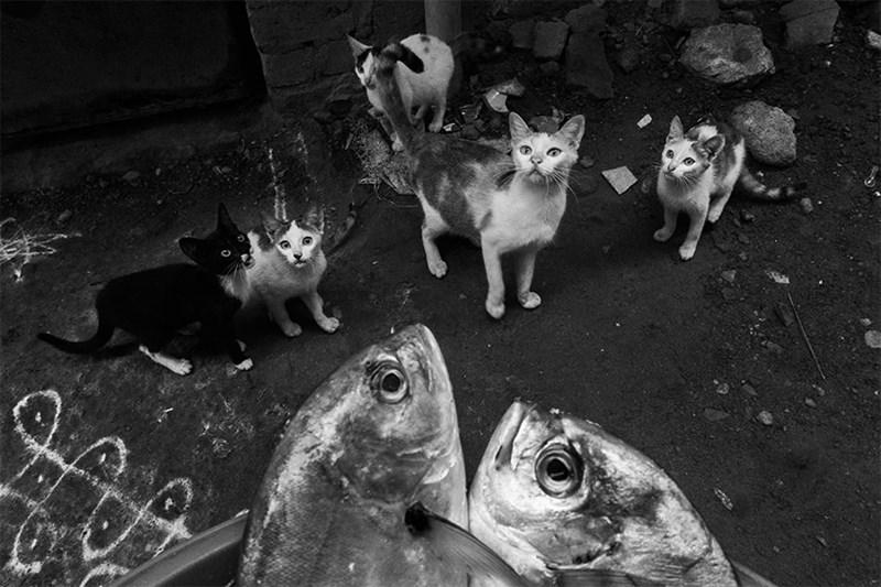 beautiful street photos of animals in India