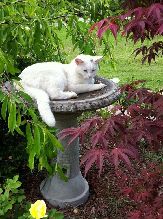 birdbath Cats funny - 3247621