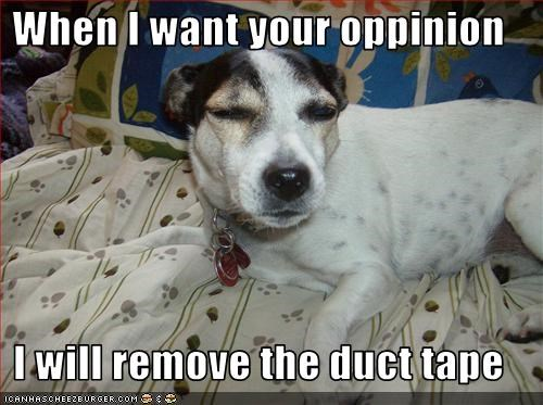 angry grumpy jack russel terrier mixed breed tape