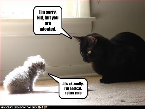 I'm sorry, kid, but you are adopted. ..it's ok..really.. i'm a lolcat, not an emo