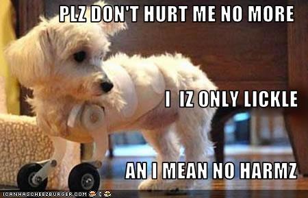 Plz Dont Hurt Me No More I Iz Only Lickle An I Mean No Harmz