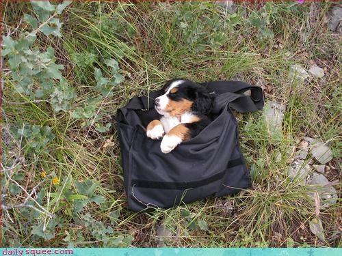 puppy purse - 3249752832
