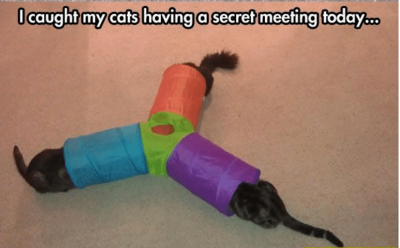 a funny picture of three cats having a meeting