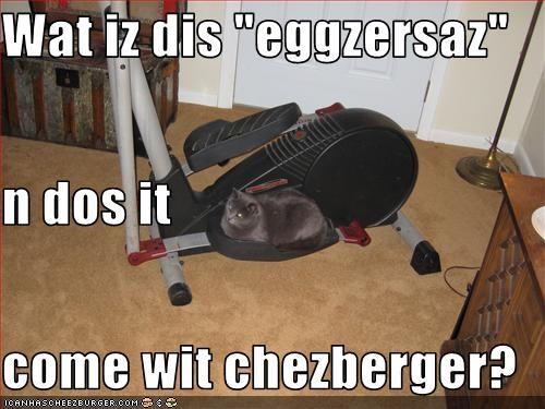 Cheezburger Image 3251386624