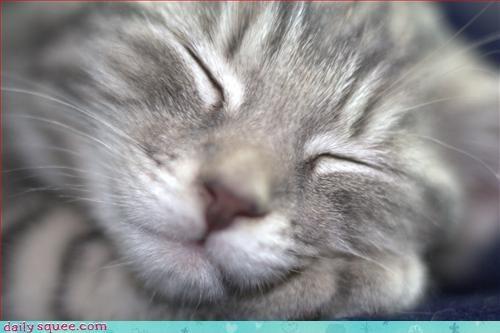 face kitten portrait - 3252256256