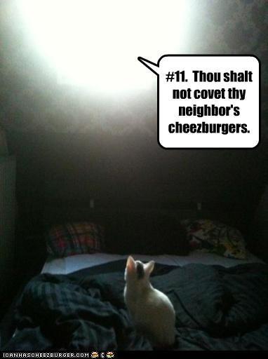 Cheezburger Image 3252434176