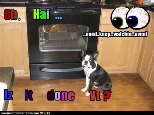 Cheezburger Image 3252928000