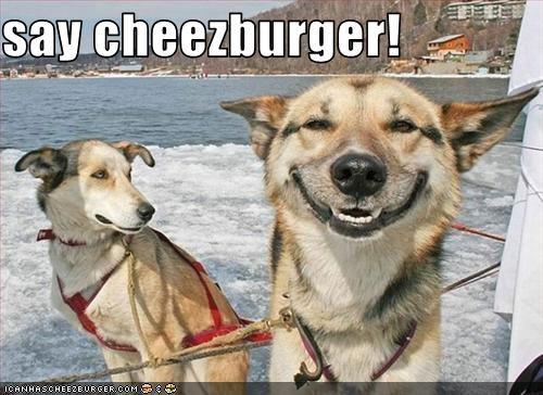 Cheezburger Image 3253540608