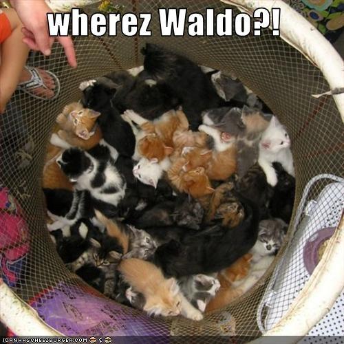 cute kitten waldo - 3253577984
